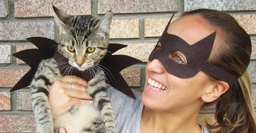 Disfraz casero para gato