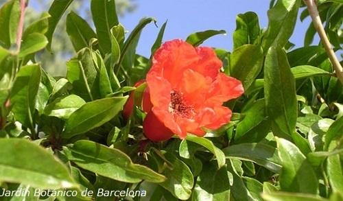 Jardines botánicos para niños